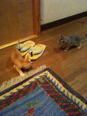 あずかり猫3.jpg