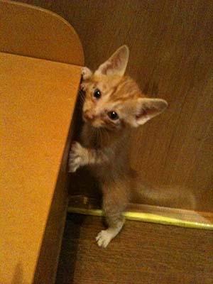 あずかり猫5.jpg