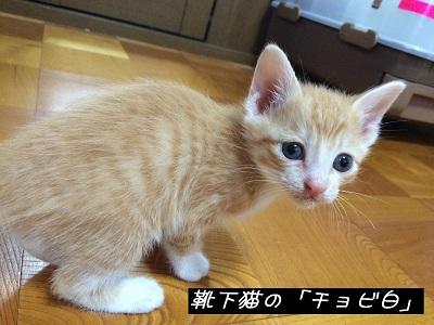 ちょび君.JPG