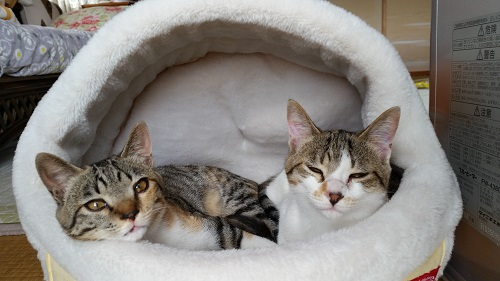 ひーちゃんとみーちゃん、いっしょのベッドで.jpg