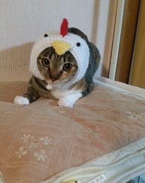 ひーちゃんの酉帽子.jpg