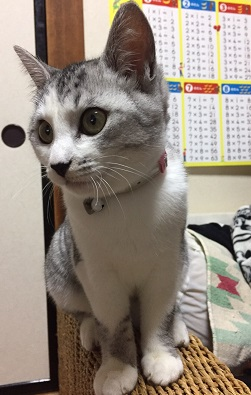 キキちゃん重倉さんのお宅で3.JPG