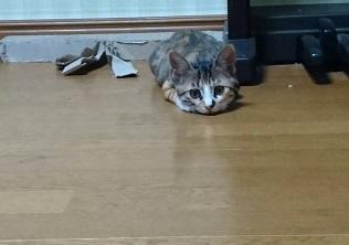 キジちゃん8月.jpg
