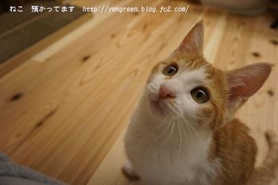 チロル・オス・3・5か月.JPG