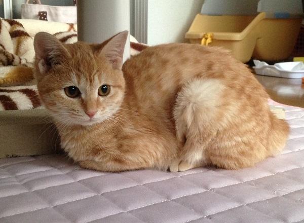 マリちゃん・信州新町山中の保護猫.JPG