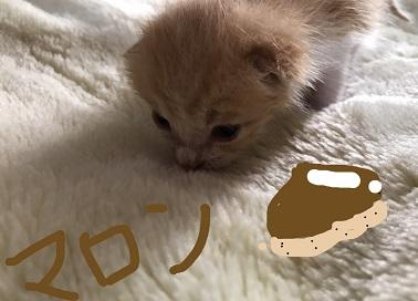 マロンちゃん.JPG