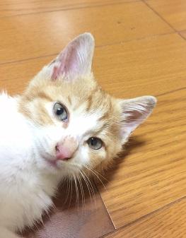 マロン君7.JPG