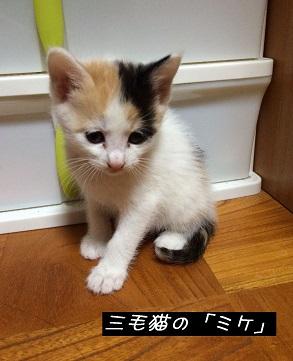 ミケちゃん.JPG
