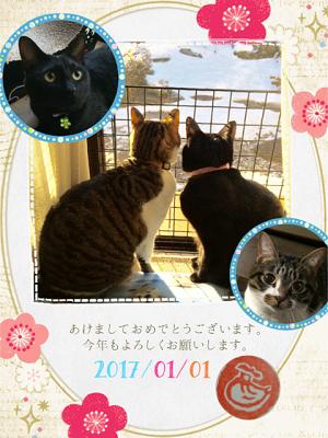 ミルク&すばる小池さんの子達2017.PNG
