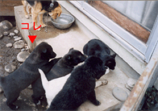 ミル子犬2.jpg