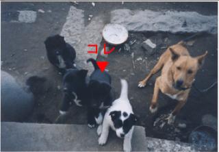 ミル子犬3.jpg
