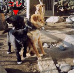 ミル子犬4.jpg