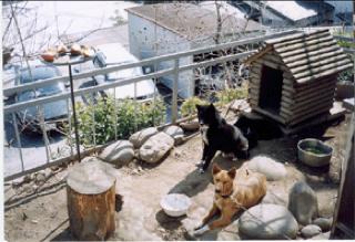 ミル子犬5.jpg