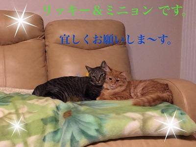 リッキー&ミニョン2.jpg