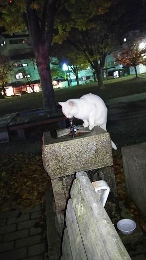 上山田猫.JPG
