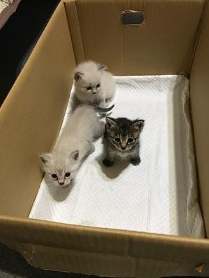 中野子猫3匹jpeg.jpeg