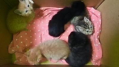 交通事故死した母猫の子達.jpg