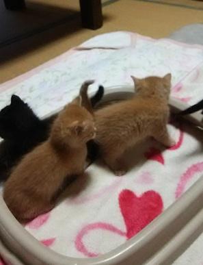 交通事故死した母猫の子達2.JPG