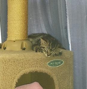 信州新町の保護猫達その後.jpg