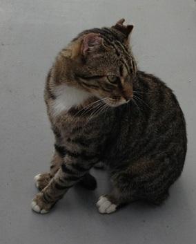 北堀保護猫.jpg