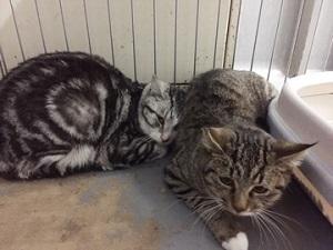 多頭飼育の保護猫.jpg