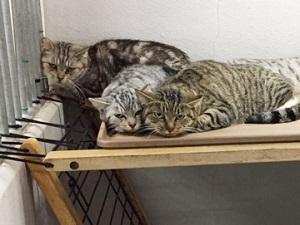 多頭飼育の保護猫2.jpg