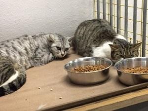 多頭飼育の保護猫3.jpg