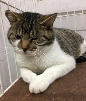 多頭飼育の保護猫6.jpg