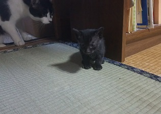 姫ちゃんの仔猫2.JPG