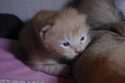 小川の子猫3.jpg