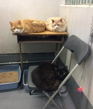 市の保健所の猫5.jpg