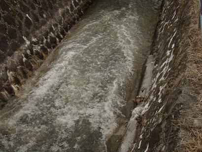 春の用水路.jpg