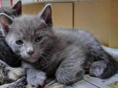 武田さんの保護猫2.jpg