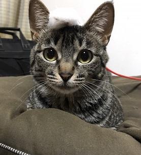 母猫チビちゃん3.JPG