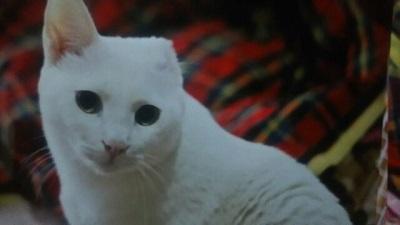 白猫・サン2歳オス.jpg