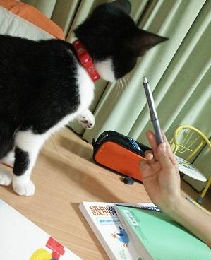白黒ちゃん.JPG