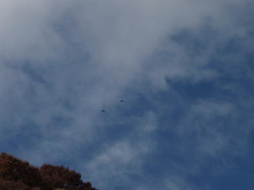空と川鵜.jpg