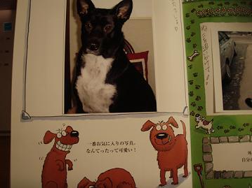 美犬の頃♪.jpg