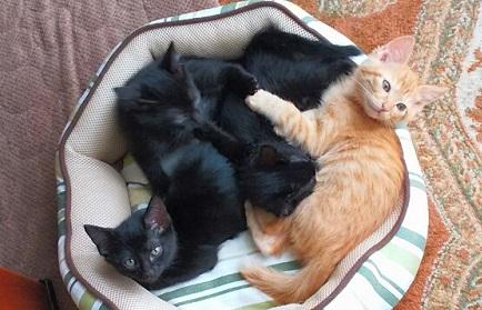 茶トラと黒猫4兄妹.jpg