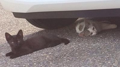 虐待されてる子猫2匹.JPG