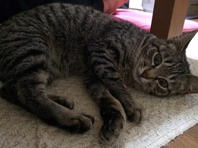 虐待されてる母猫2.JPG