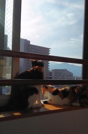 里親さんの家でトンちゃん(きなこ)ロンちゃん(あんこ)3.jpg