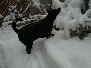 雪とミル.jpg