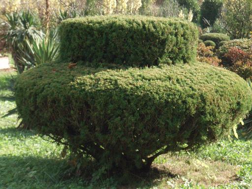 面白植木2.jpg