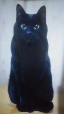 黒猫・ひまわり・2歳・メス.jpg