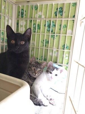 3匹の親仔猫.jpg