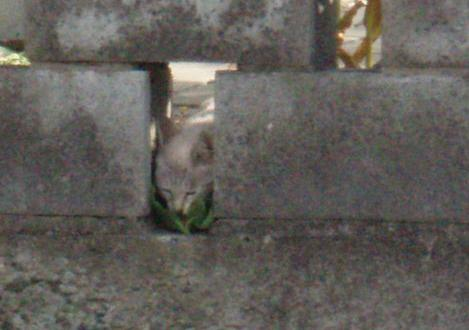 5匹目のピアス猫.jpg