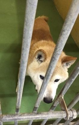 9月11日エントリー犬.jpg