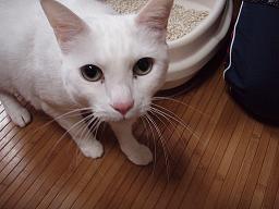 Mさんの猫1.jpg