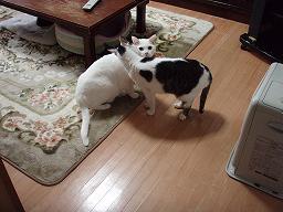 Mさんの猫10.jpg